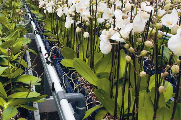 PVC buizen in de tuinbouw
